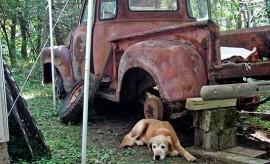 dogandtruck-546tr