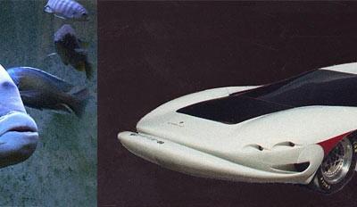 Corvette-Charisma-Colani